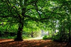 秋天颜色在森林 免版税库存图片
