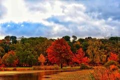 秋天颜色在池塘附近突出一个森林 免版税库存照片