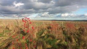 秋天颜色在沉思的天空下 库存图片