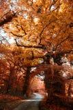 秋天颜色在爱尔兰 库存图片