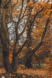 秋天颜色在米德尔斯布勒 免版税图库摄影