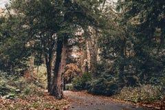 秋天颜色在米德尔斯布勒 免版税库存照片