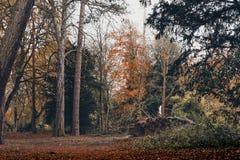 秋天颜色在米德尔斯布勒 图库摄影