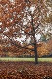 秋天颜色在米德尔斯布勒 库存图片