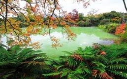 秋天颜色在罗托路亚 免版税库存图片