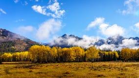 秋天颜色在落矶山在班夫国家公园 库存图片