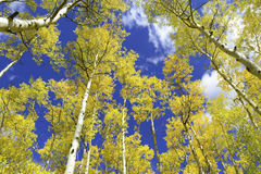 秋天颜色在落矶山,美国 免版税库存照片