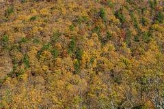 秋天颜色在蓝岭山脉,弗吉尼亚,美国 免版税库存照片