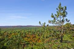 秋天颜色在阿尔根金族公园 免版税库存图片