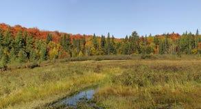 秋天颜色在阿尔根金族公园 图库摄影