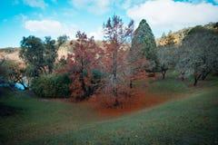 秋天颜色在登上崇高植物园里 免版税图库摄影