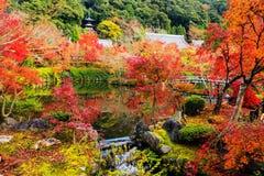 秋天颜色在Eikando,京都 库存照片
