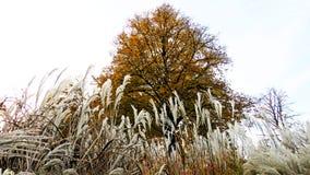 秋天颜色在Volkspark恩斯赫德 图库摄影
