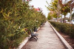 秋天颜色户外,长凳和花 免版税库存照片