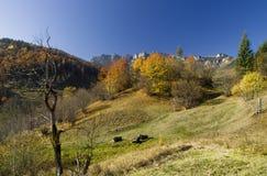 秋天颜色柔和的淡色彩  图库摄影