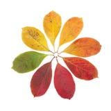 秋天颜色标志 库存照片