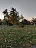 秋天颜色树 库存照片