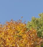 秋天颜色森林在斯摩棱斯克 俄国 免版税库存照片