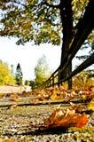 秋天颜色热  库存照片