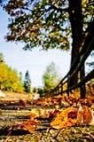 秋天颜色热  库存图片
