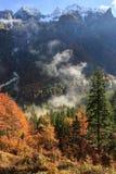 秋天颜色的具球果和落叶山森林 库存照片