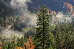 秋天颜色的具球果和落叶山森林 免版税库存图片