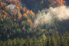 秋天颜色的具球果和落叶山森林 图库摄影