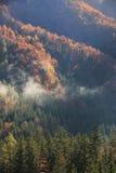 秋天颜色的具球果和落叶山森林 免版税库存照片