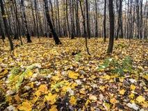 秋天颜色的森林 库存图片