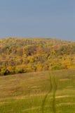 秋天颜色的森林 库存照片