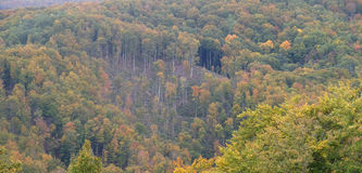 秋天颜色的森林 免版税库存图片