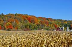 秋天颜色的看法在明尼苏达河谷 库存图片
