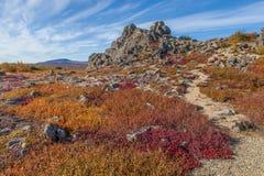秋天颜色的育空北极寒带草原 库存图片