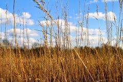 秋天颜色的领域在印第安纳草甸 图库摄影