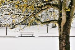 秋天颜色第一个银杏树雪结构树冬天 库存图片