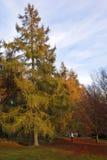 秋天颜色结构树森林地 免版税库存图片