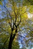 秋天颜色英国小山lickey 库存图片
