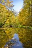 秋天颜色被反射的流 库存图片