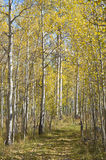 秋天颜色西部的科罗拉多 库存图片