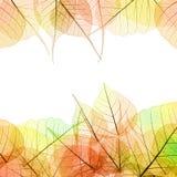 秋天颜色透明叶子框架在白色-隔绝的 免版税库存照片