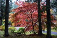 秋天颜色通过森林 免版税库存照片