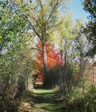 秋天颜色通过自然曲拱 免版税图库摄影