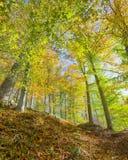 秋天颜色,急流足迹, McKeldin度假区, Patapsco谷国家公园, MD 库存图片