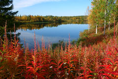 秋天颜色,拉普兰 免版税库存图片