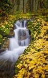 秋天颜色,瀑布,科罗拉多 库存照片