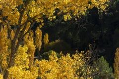 秋天颜色,里约蒙多河来源,自然公园Los Calares del rAoo蒙多河y de la西玛,山脉de阿尔卡拉斯y del塞古拉 图库摄影