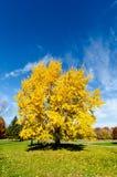 秋天颜色,黄色 免版税库存图片