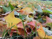 秋天颜色:在槭树叶子报道的地面 免版税图库摄影