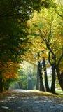 秋天颜色 改变树叶子的肤色 图库摄影