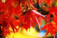 秋天颜色 免版税图库摄影